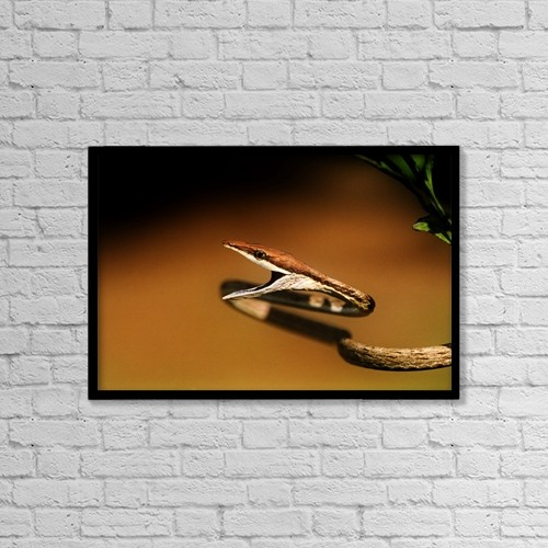 "Printscapes Wall Art: 18"" x 12"" Canvas Print With Black Frame - A Brown Vine Snake With Its Mouth Open by Jack Goldfarb"