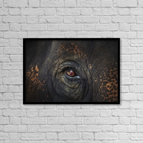 "Printscapes Wall Art: 18"" x 12"" Canvas Print With Black Frame - Closeup Of An Animal's Eye by Deddeda"