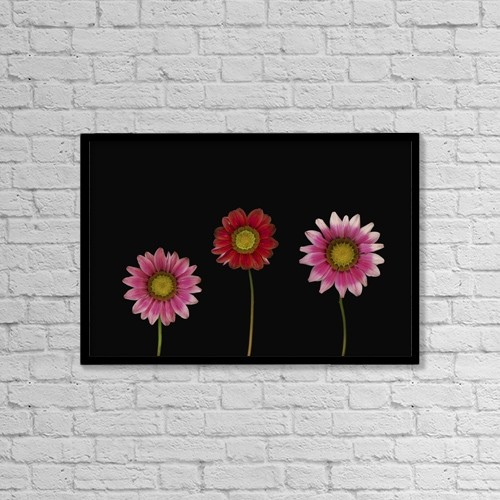 "Printscapes Wall Art: 18"" x 12"" Canvas Print With Black Frame - Bright Colorful Daisies by Deddeda"