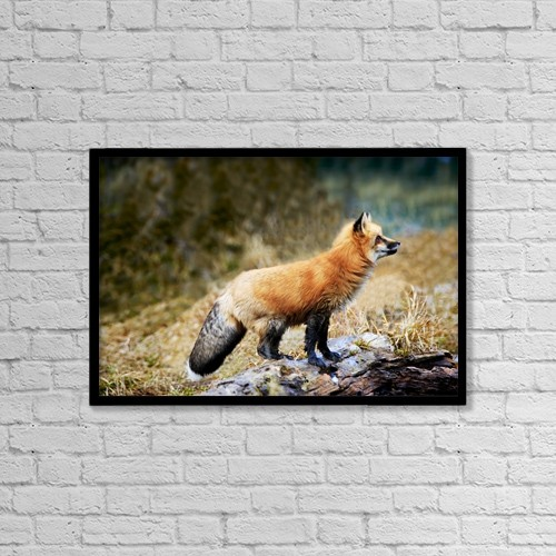 "Printscapes Wall Art: 18"" x 12"" Canvas Print With Black Frame - Red Fox On Rocks by Richard Wear"