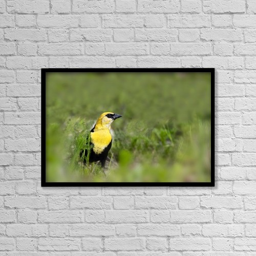"Printscapes Wall Art: 18"" x 12"" Canvas Print With Black Frame - Yellow Headed Blackbird by Richard Wear"