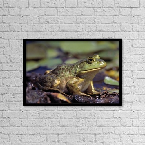 """Printscapes Wall Art: 18"""" x 12"""" Canvas Print With Black Frame - Close-Up Of A Bullfrog by Natural Selection Bill Byrne"""