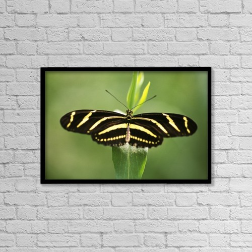 """Printscapes Wall Art: 18"""" x 12"""" Canvas Print With Black Frame - Butterfly by Natural Selection Craig Tuttle"""