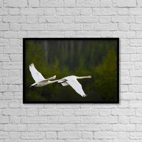 "Printscapes Wall Art: 18"" x 12"" Canvas Print With Black Frame - Geese In Flight by Richard Wear"