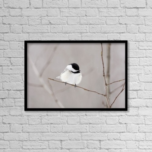 "Printscapes Wall Art: 18"" x 12"" Canvas Print With Black Frame - Bird On A Branch by Richard Wear"