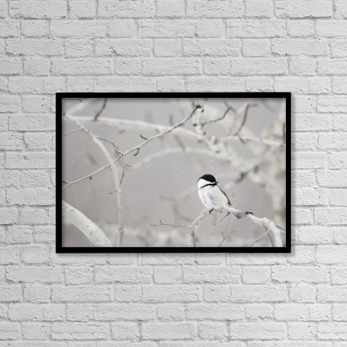 "Printscapes Wall Art: 18"" x 12"" Canvas Print With Black Frame - Small Bird On Tree Branch by Richard Wear"