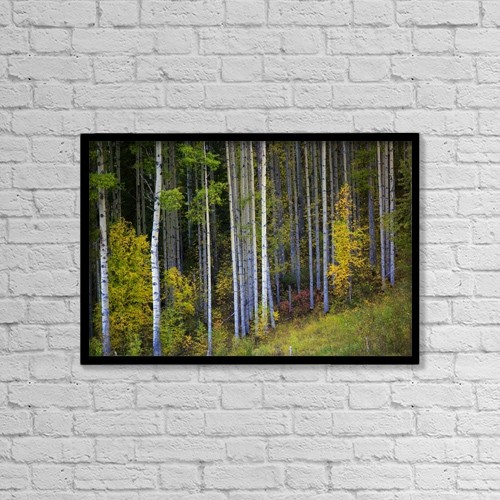 "Printscapes Wall Art: 18"" x 12"" Canvas Print With Black Frame - Trees In A Forest by Richard Wear"