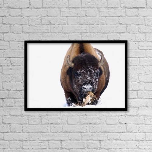 "Printscapes Wall Art: 18"" x 12"" Canvas Print With Black Frame - Bison In Winter by Richard Wear"