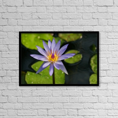 "Printscapes Wall Art: 18"" x 12"" Canvas Print With Black Frame - Purple Water Lily by Christine Mariner"