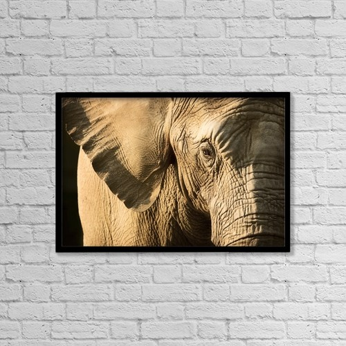 "Printscapes Wall Art: 18"" x 12"" Canvas Print With Black Frame - Elephant by Chris and Kate Knorr"