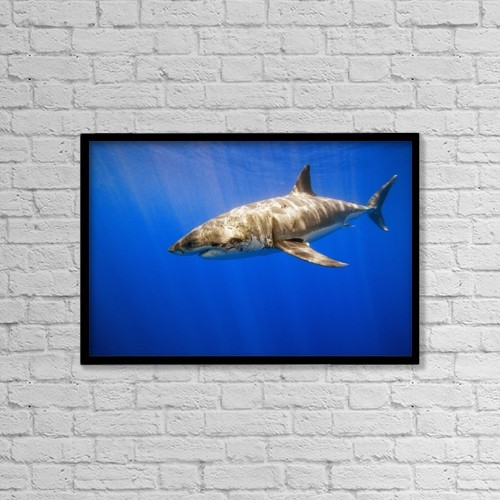 """Printscapes Wall Art: 18"""" x 12"""" Canvas Print With Black Frame - Great White Shark by Carson Ganci"""
