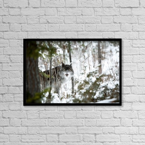 "Printscapes Wall Art: 18"" x 12"" Canvas Print With Black Frame - Wolf In The Snow by Richard Wear"