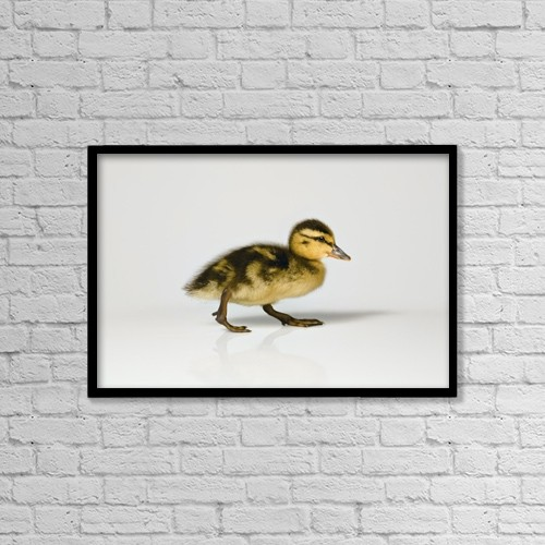 """Printscapes Wall Art: 18"""" x 12"""" Canvas Print With Black Frame - Duckling Walking by Leah Hammond"""