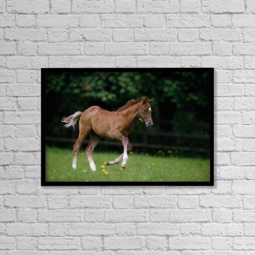 """Printscapes Wall Art: 18"""" x 12"""" Canvas Print With Black Frame - Animals by The Irish Image Collection"""