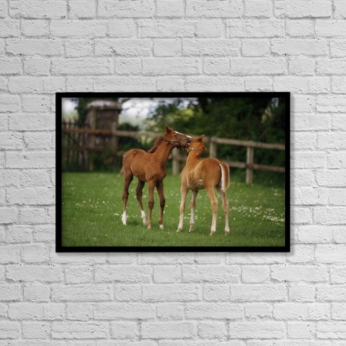"""Printscapes Wall Art: 18"""" x 12"""" Canvas Print With Black Frame - Thoroughbred Foal, Ireland by The Irish Image Collection"""