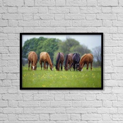 """Printscapes Wall Art: 18"""" x 12"""" Canvas Print With Black Frame - Thoroughbred Horse, Ireland by The Irish Image Collection"""
