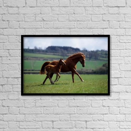 "Printscapes Wall Art: 18"" x 12"" Canvas Print With Black Frame - Animals by The Irish Image Collection"
