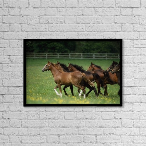 "Printscapes Wall Art: 18"" x 12"" Canvas Print With Black Frame - Thoroughbred Horses, Ireland by The Irish Image Collection"