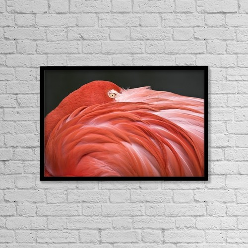 "Printscapes Wall Art: 18"" x 12"" Canvas Print With Black Frame - Animals by Chris Upton"