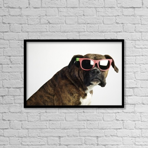 """Printscapes Wall Art: 18"""" x 12"""" Canvas Print With Black Frame - Boxer Wearing Sunglasses by Ron Nickel"""