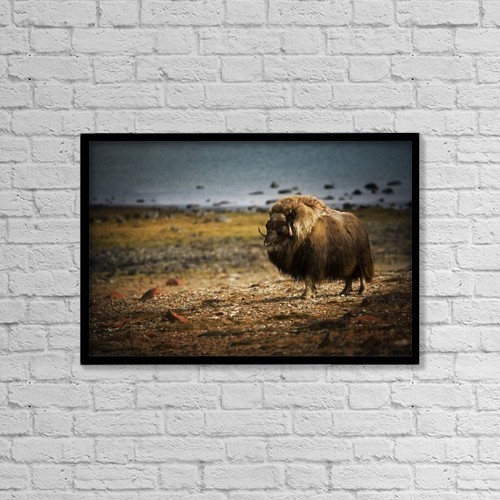 """Printscapes Wall Art: 18"""" x 12"""" Canvas Print With Black Frame - Animals by Darren Greenwood"""