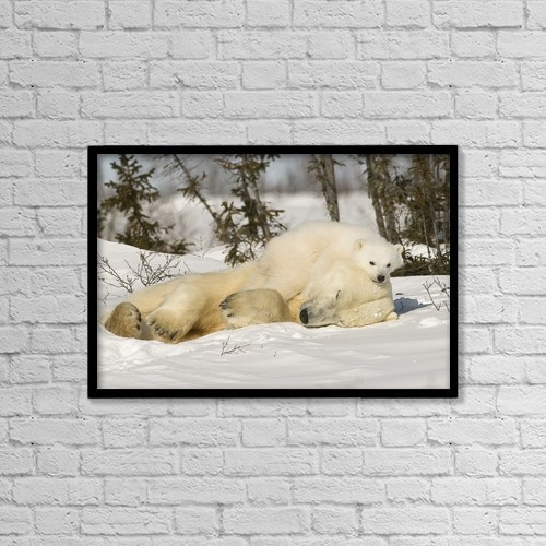 """Printscapes Wall Art: 18"""" x 12"""" Canvas Print With Black Frame - Polar Bear With Cub In Snow by Robert Brown"""