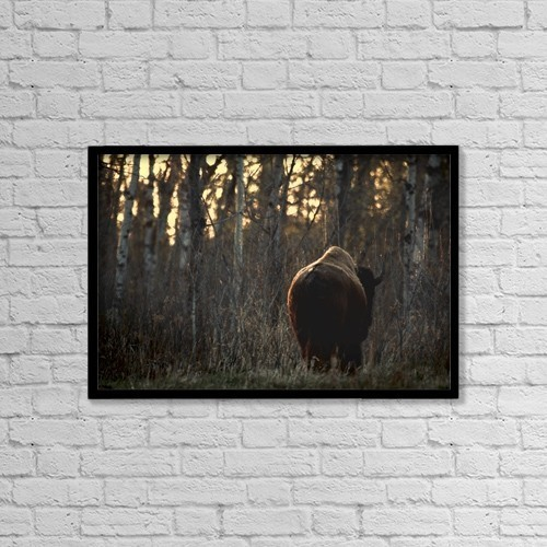 """Printscapes Wall Art: 18"""" x 12"""" Canvas Print With Black Frame - Rear View Of One Buffalo by Richard Wear"""