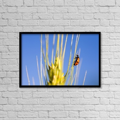 "Printscapes Wall Art: 18"" x 12"" Canvas Print With Black Frame - Ladybug On Wheat by Craig Tuttle"