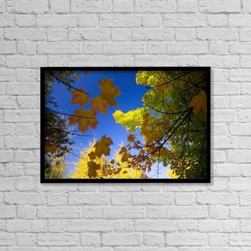 """Printscapes Wall Art: 18"""" x 12"""" Canvas Print With Black Frame - Maple Trees In Autumn by Craig Tuttle"""