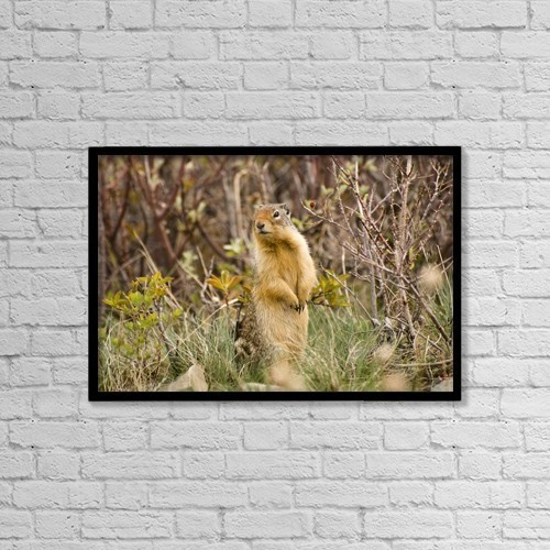 "Printscapes Wall Art: 18"" x 12"" Canvas Print With Black Frame - Colombian Ground Squirrel by Philippe Widling"
