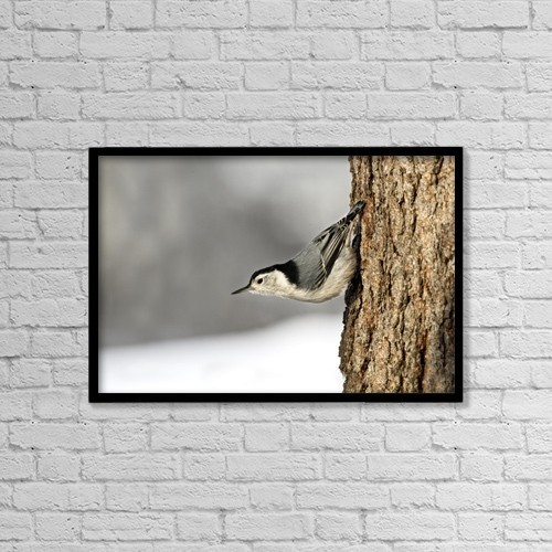 "Printscapes Wall Art: 18"" x 12"" Canvas Print With Black Frame - Bird On The Side Of A Tree by Richard Wear"