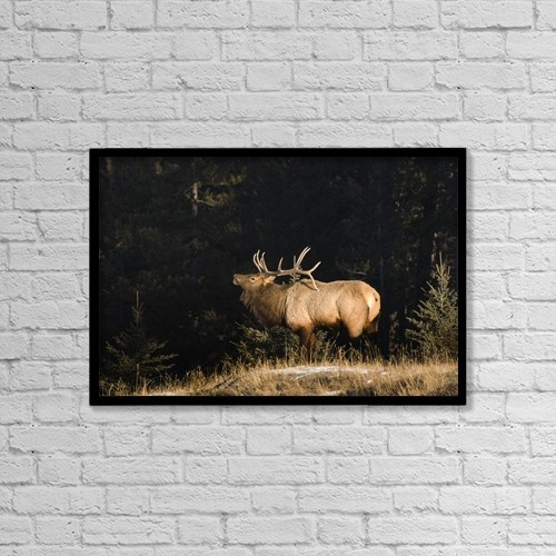 """Printscapes Wall Art: 18"""" x 12"""" Canvas Print With Black Frame - Animals by Philippe Widling"""