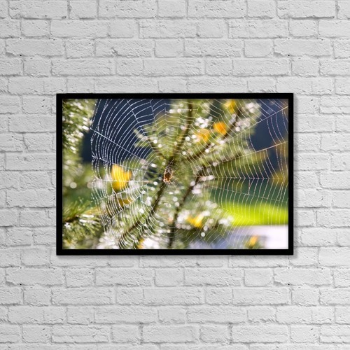 "Printscapes Wall Art: 18"" x 12"" Canvas Print With Black Frame - Spider On Web by Craig Tuttle"