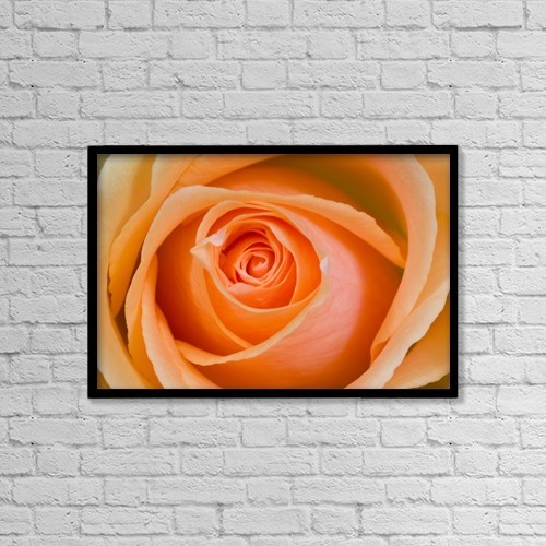 "Printscapes Wall Art: 18"" x 12"" Canvas Print With Black Frame - Orange Rose by Craig Tuttle"