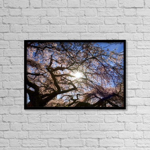 "Printscapes Wall Art: 18"" x 12"" Canvas Print With Black Frame - Sunlight Shining Through Tree Branches by Craig Tuttle"