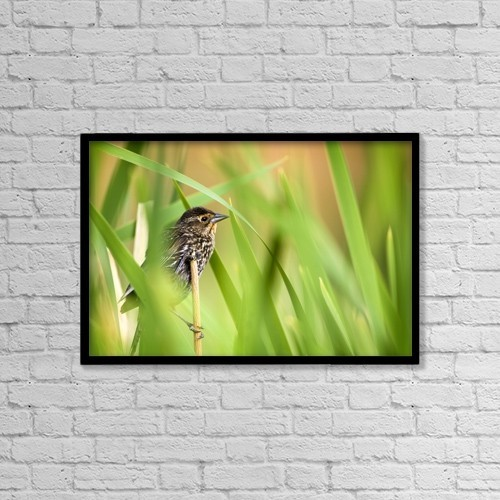"Printscapes Wall Art: 18"" x 12"" Canvas Print With Black Frame - Pine Warbler (Dendroica Pinus) by Richard Wear"