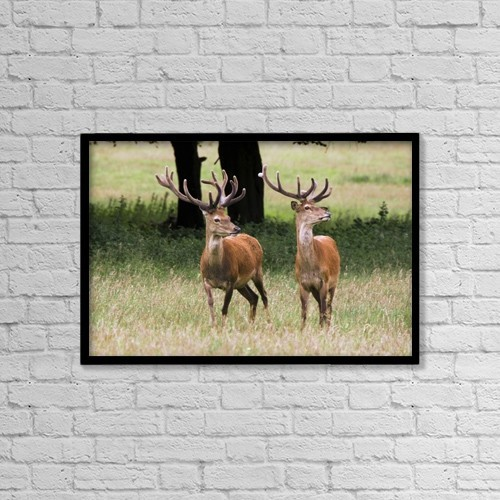 "Printscapes Wall Art: 18"" x 12"" Canvas Print With Black Frame - Elk In The Wild by John Short"