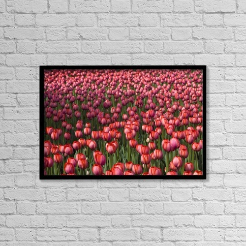 "Printscapes Wall Art: 18"" x 12"" Canvas Print With Black Frame - Tulips by David Chapman"