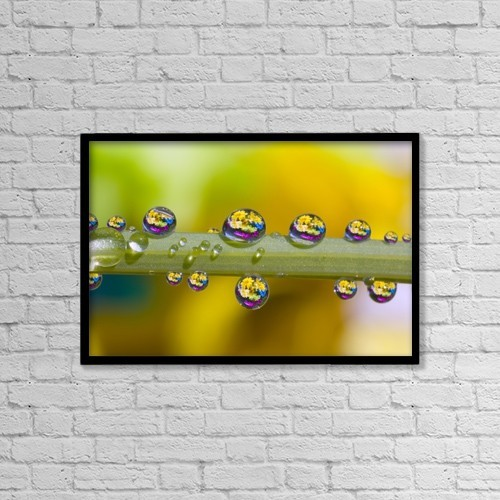"Printscapes Wall Art: 18"" x 12"" Canvas Print With Black Frame - Water Drops On A Flower Stem by Craig Tuttle"