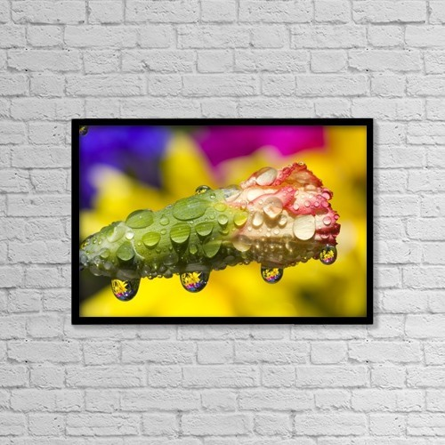 """Printscapes Wall Art: 18"""" x 12"""" Canvas Print With Black Frame - Water Drops On A Budding Flower by Craig Tuttle"""