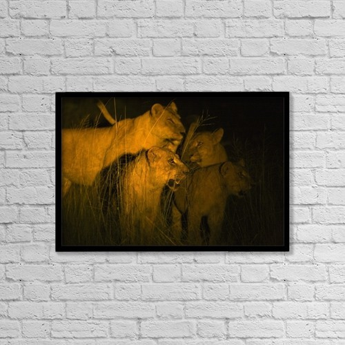 """Printscapes Wall Art: 18"""" x 12"""" Canvas Print With Black Frame - Lions At Night by Carson Ganci"""