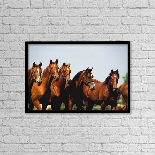 """Printscapes Wall Art: 18"""" x 12"""" Canvas Print With Black Frame - Ireland, Yearling Thoroughbred by The Irish Image Collection"""