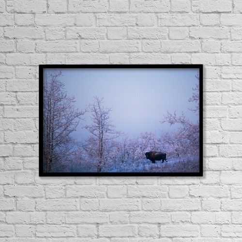 """Printscapes Wall Art: 18"""" x 12"""" Canvas Print With Black Frame - Buffalo In Snowy Woods by Richard Wear"""