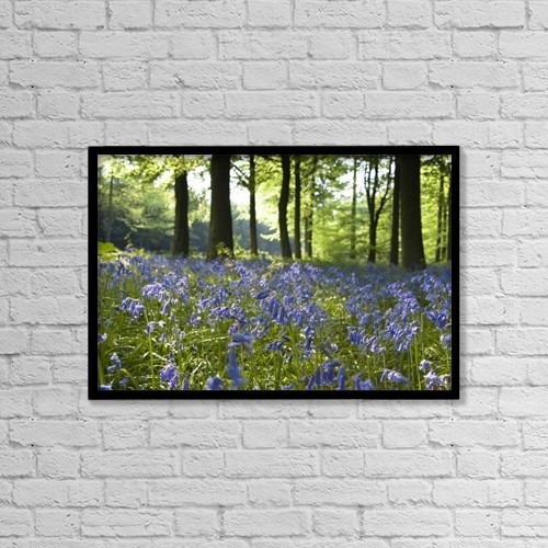 "Printscapes Wall Art: 18"" x 12"" Canvas Print With Black Frame - Bluebells On Forest Floor by John Short"