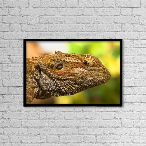 "Printscapes Wall Art: 18"" x 12"" Canvas Print With Black Frame - Portrait Of A Bearded Dragon by John Short"