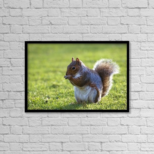 "Printscapes Wall Art: 18"" x 12"" Canvas Print With Black Frame - Squirrel On Grass by John Short"