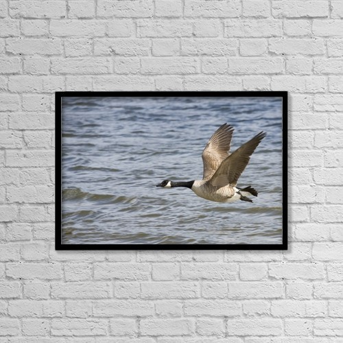 "Printscapes Wall Art: 18"" x 12"" Canvas Print With Black Frame - Goose Flying Over Water by John Short"