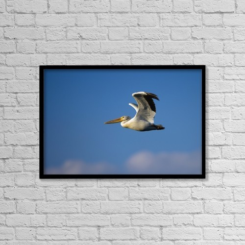 "Printscapes Wall Art: 18"" x 12"" Canvas Print With Black Frame - Flying Pelican by Richard Wear"