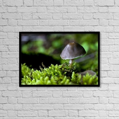 "Printscapes Wall Art: 18"" x 12"" Canvas Print With Black Frame - Closeup Of Mushroom by John Short"