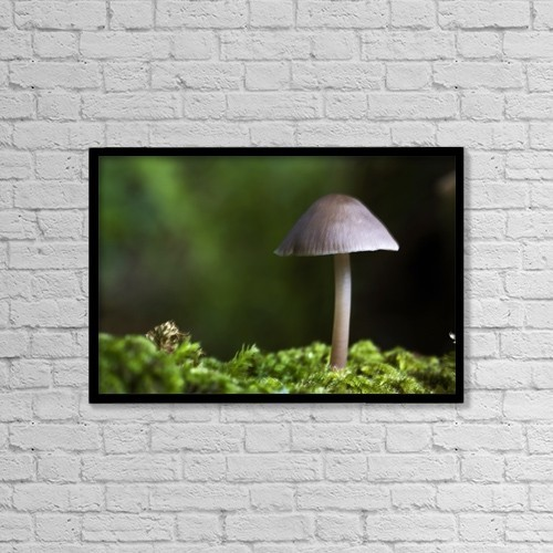 "Printscapes Wall Art: 18"" x 12"" Canvas Print With Black Frame - Close-Up Of Mushroom by John Short"